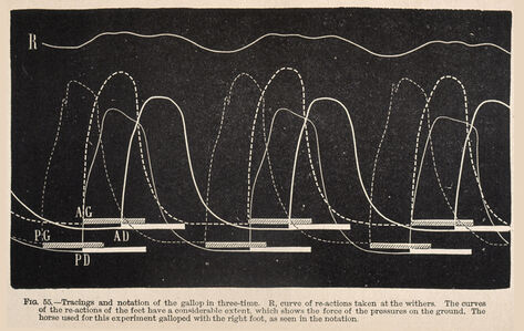 Fig. 55: Tracings and notation of the gallop in three-time ...