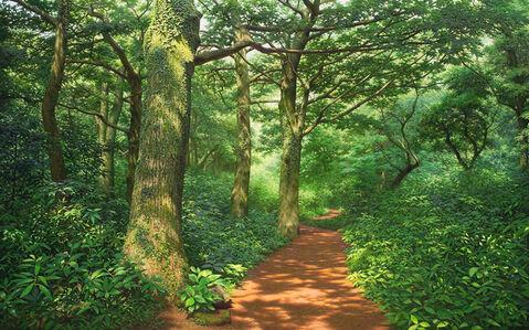 No94 Silent Woods