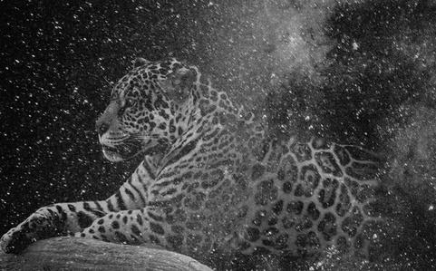 Que muera conmigo el misterio que está escrito en los tigres