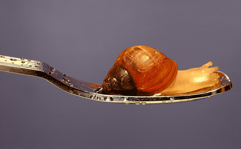 Nothing.Life.Object (Snail on Spoon)