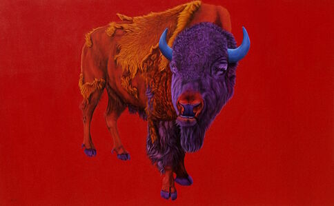 Buffalo on a Red Background