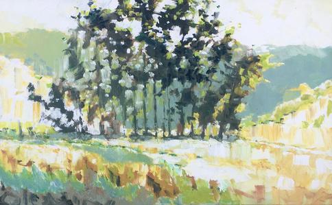 Tennessee Valley Eucalyptus #13
