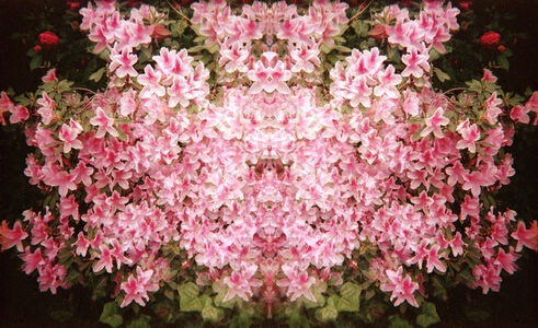 Flowers of Pink