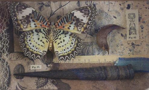 Nymphalidae Cethosia Myrnia