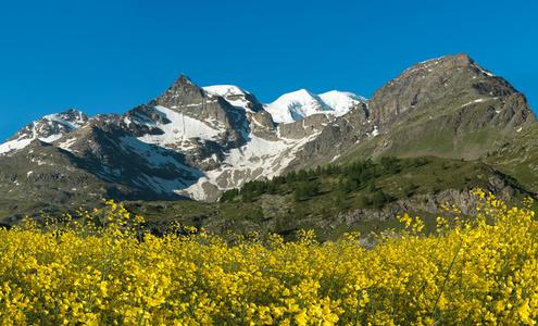 Berg Gelb