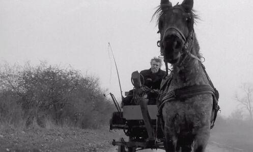 Béla Tarr, The Turin Horse (A torinói ló), 2011, courtesy Béla Tarr 22