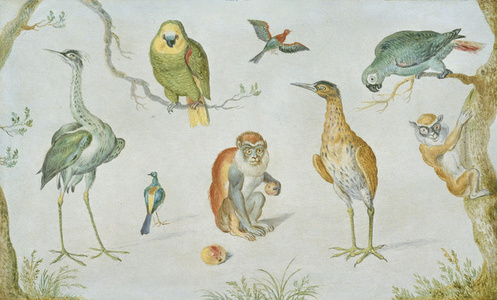 Study of Birds and Monkeys