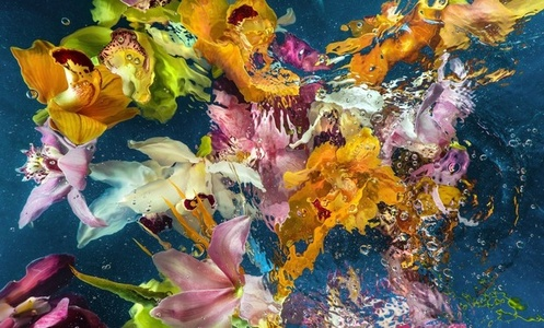 Aqua Flora no.006