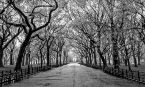 Central Park Forest