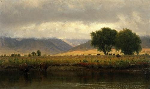 Buffalo on the Platte River
