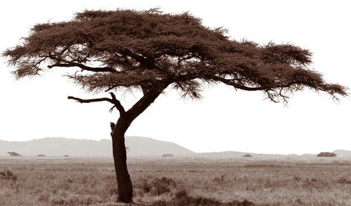 Serengeti Tree #7