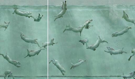 Aquarium 26 (diptych)