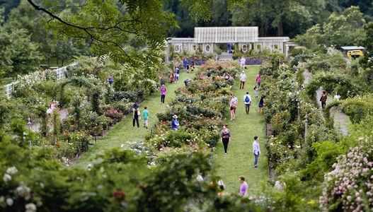 Brooklyn Botanic Gardens [June 10, 2012]