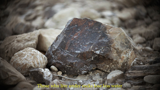 A Stone That Can't Be Turned