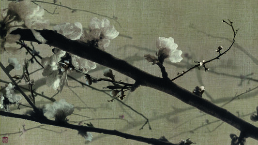 Blossoming Flowers on assa Cloth