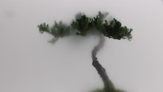 Still Life 01-Pine