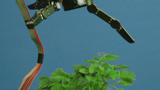 The Pudic Relation Between Machine and Plant