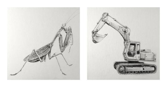 Par/adox (Mantis)