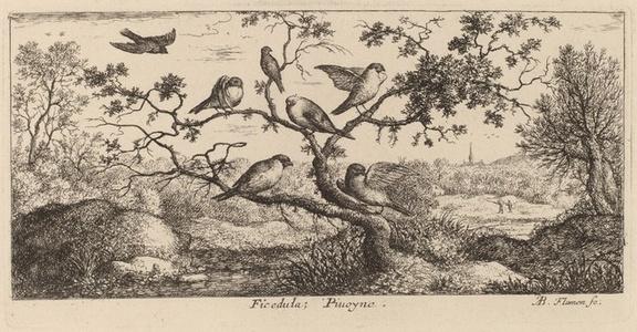 Ficedula, The Bullfinch