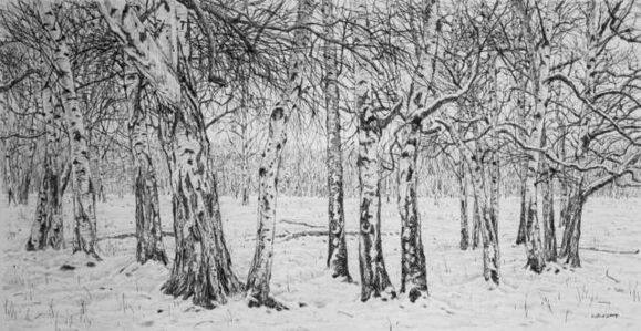 Winter Silver Birches