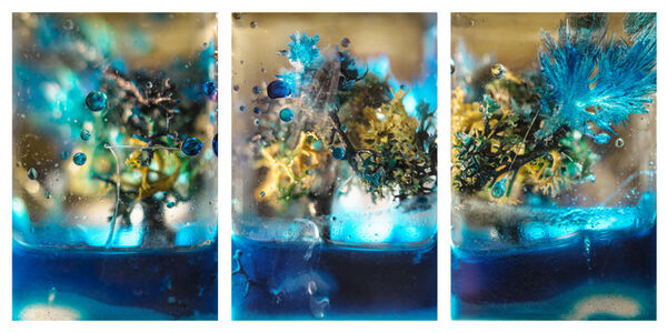 Blue Tree Triptych