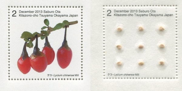 Seed Plant / Lycium Chinese