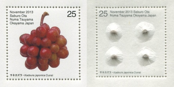 Seed Plant / Kadsura japonica