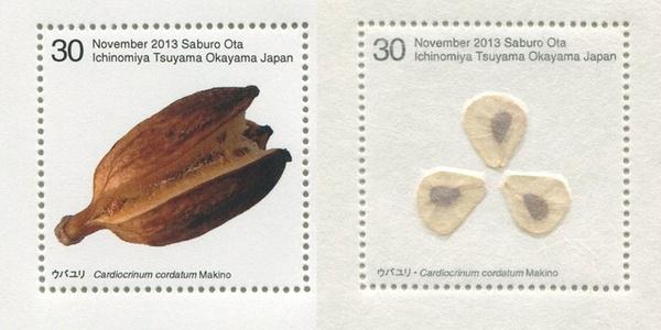 Seed Plant / Cardiocrinum Cordatum Makino