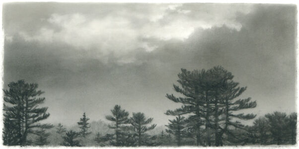 Pine, clearing sky