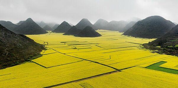 Canola Fields, Luoping, Yunnan Province, China