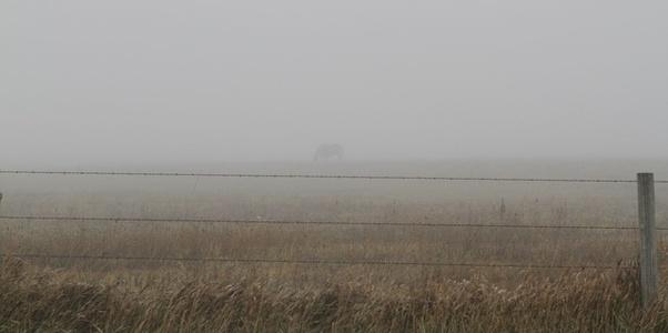 Grey Gazing (U.S.)