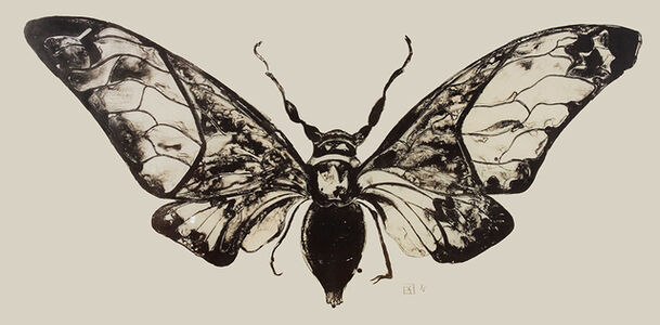 Salvazana Imperialis (black and white)