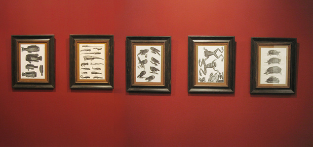 Zoología seccionada Pecerum, reptiliae (tortugae y lagarterum), anfibiae y aviarum