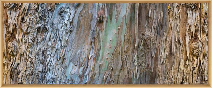 Eucalyptus, 370°