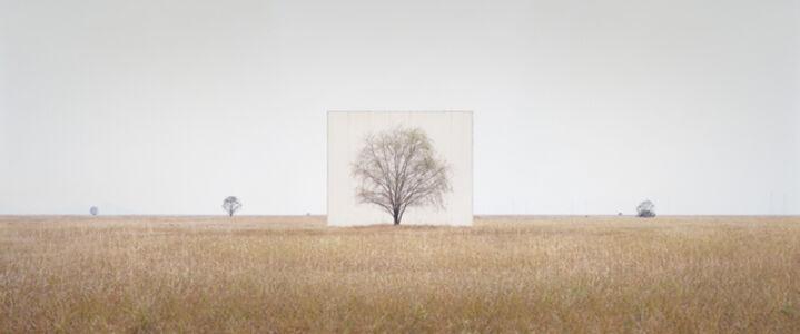 Tree…#3