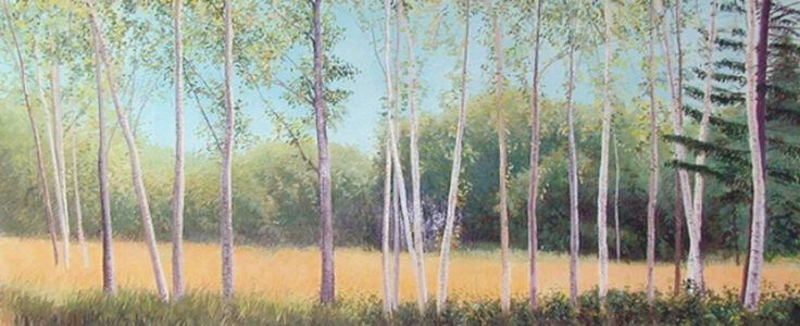 Birch Field Afternoon