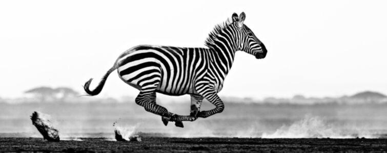 Desert Flight, Amboseli, Kenya