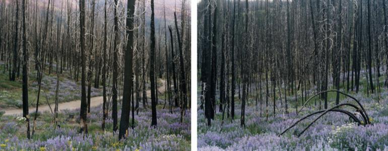 Untitled (Sawtooth Valley, Idaho) (#94132-94128)