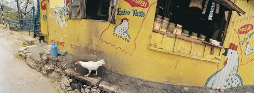 India, Darjeeling, Chicken Taste.