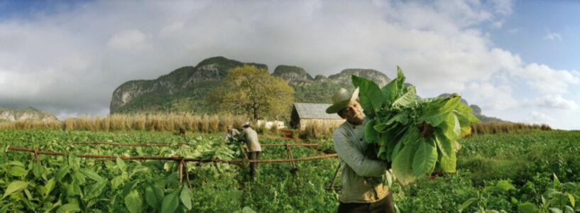 Man in a Tobacco Field II, Pinar del Rio