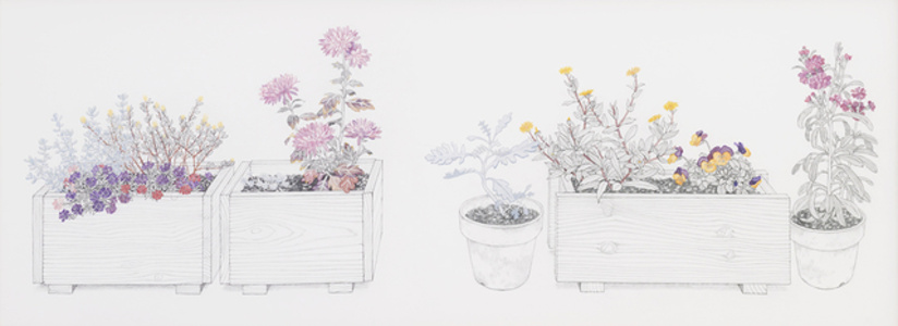 Containers and Potted Plants in My House (自宅のコンテナと鉢植え )