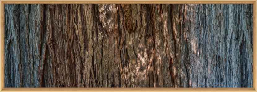 Redwood 370º