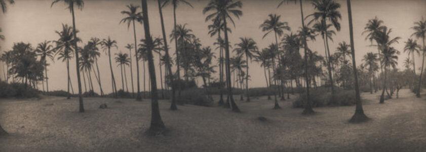 Palm trees at Arambol Beach, Goa, India