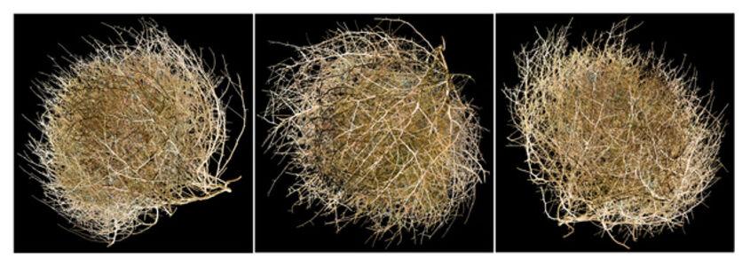Tumbleweed Triptych