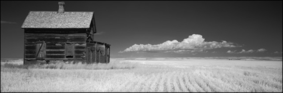 Near Chester, Liberty County, Montana, 1996
