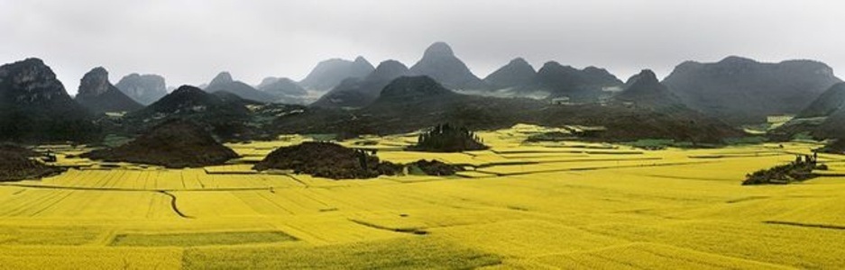 Canola Fields #2, Luoping, Yunnan Province, China