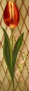 Tulip & Trellis