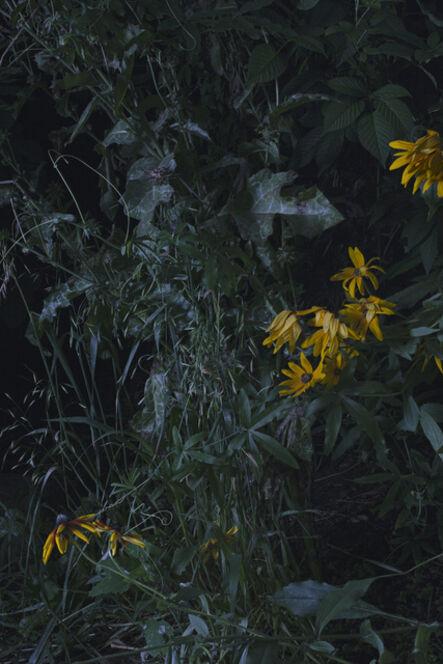 Sharon Core, 'Untitled #8', 2015
