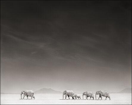 Nick Brandt, 'Elephants on Bleached Lake Bed ', 2008