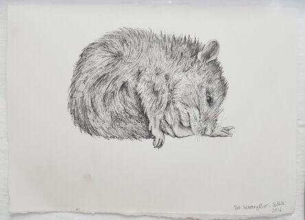 Olivia Kemp, 'Rat, Waveney River, Suffolk', 2016